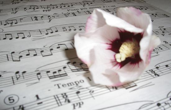 La petite musique des mots