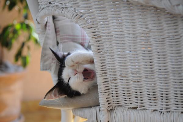 Minette-en-pleine-sieste