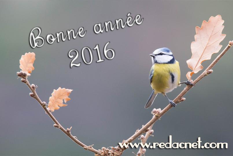 Voeux 2016 de RédacNet, rédactrice, correctrice, conseillère littéraire